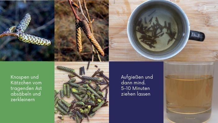 Birken-Tee Knospen Kätzchen
